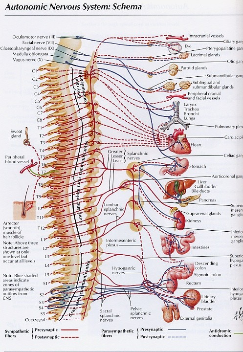 Opu Hulistomach Massage Colon Hydrotherapy